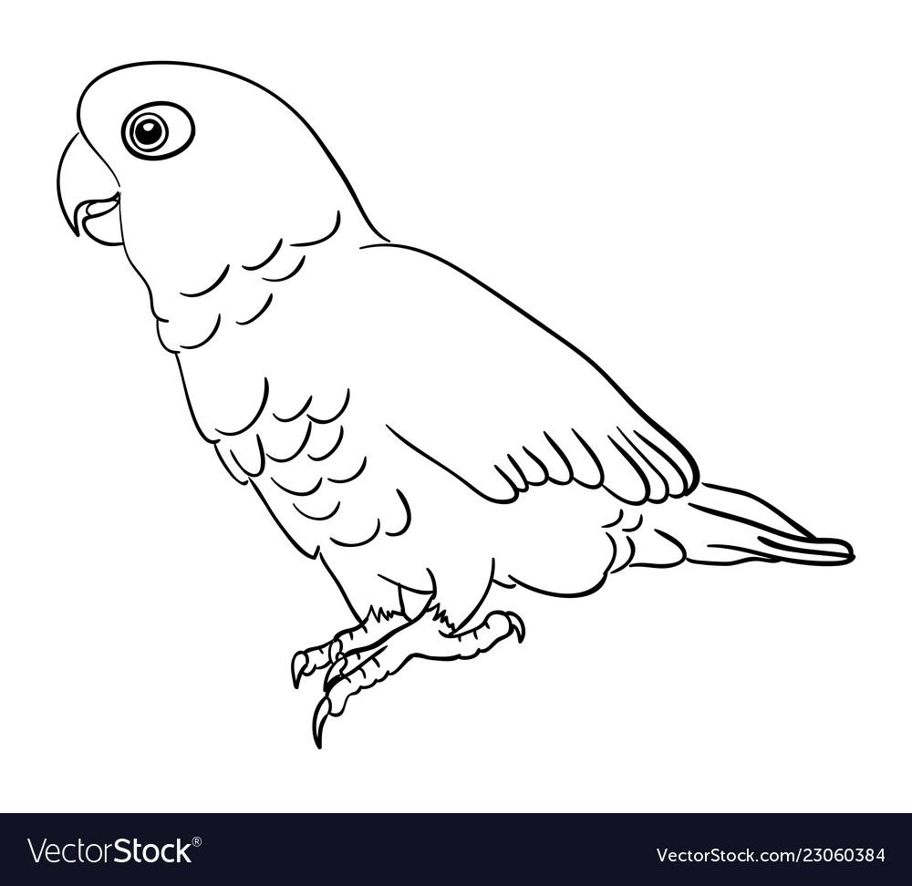 Cockatoo bird line art 01