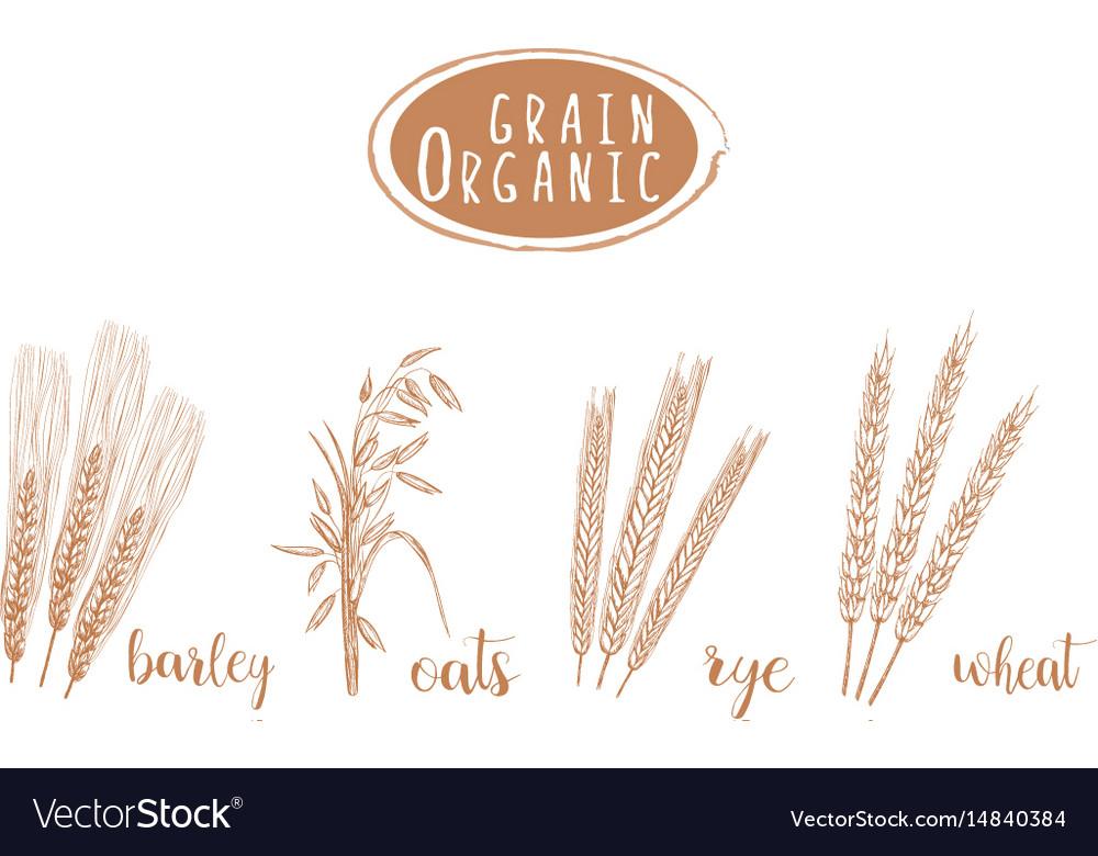 Organic grain sketch hand drawing