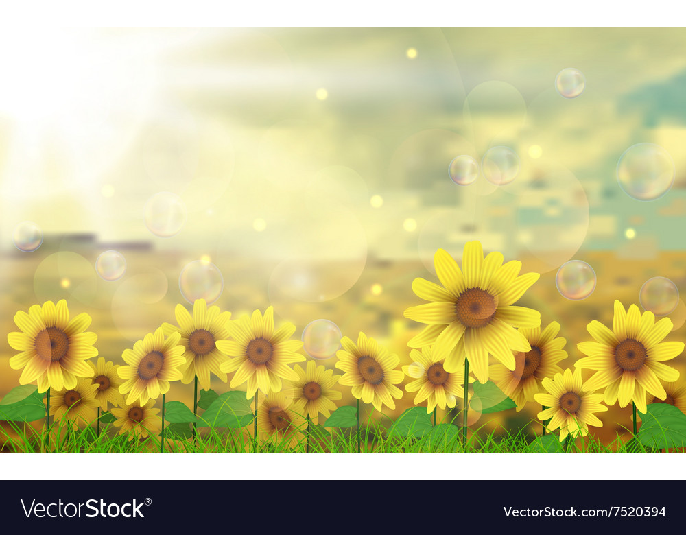 Summer sun over the sunflower field vector image