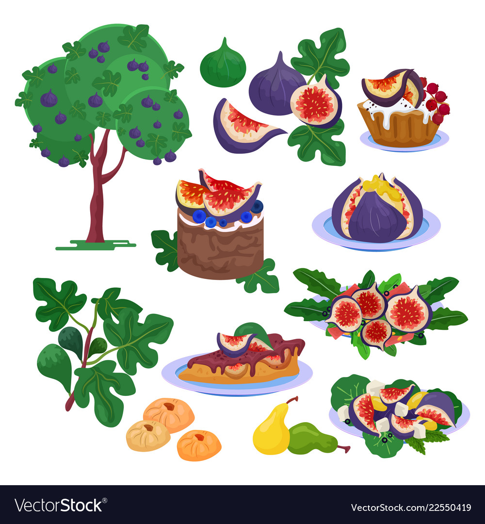 Fig fresh fruity food and ripe figs healthy