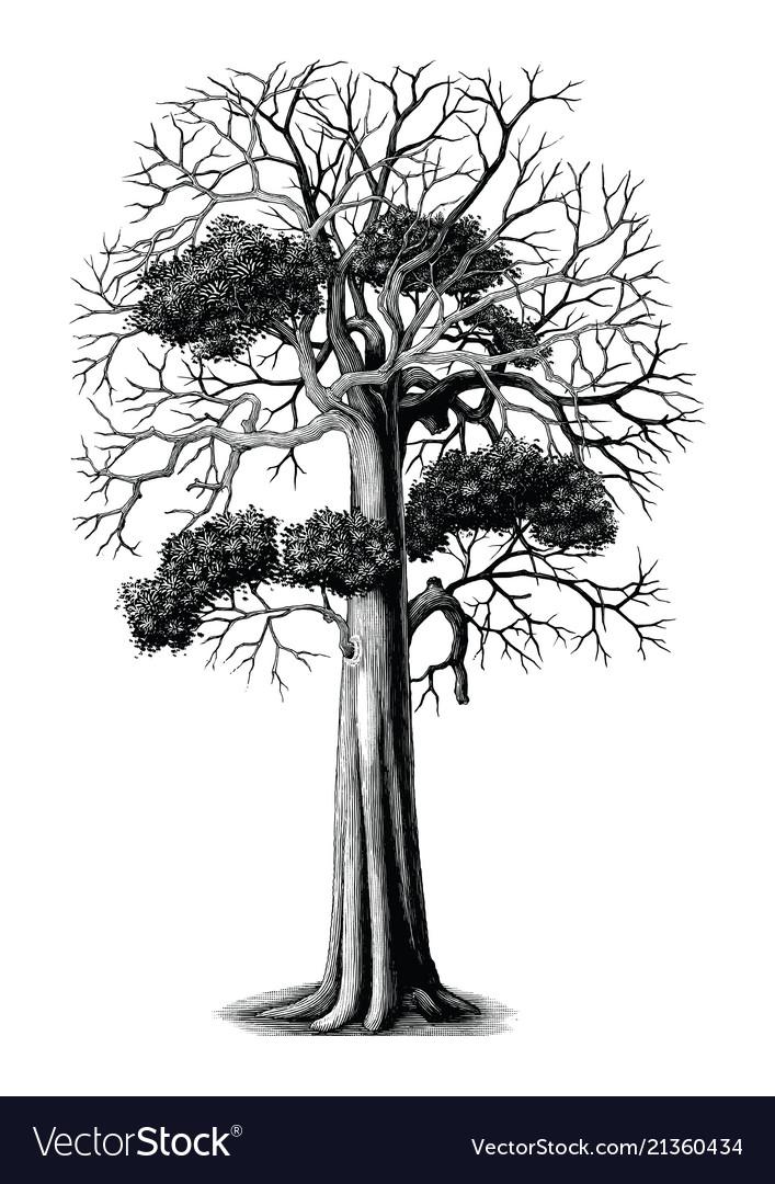 Tree hand drawing vintage engraving clip art