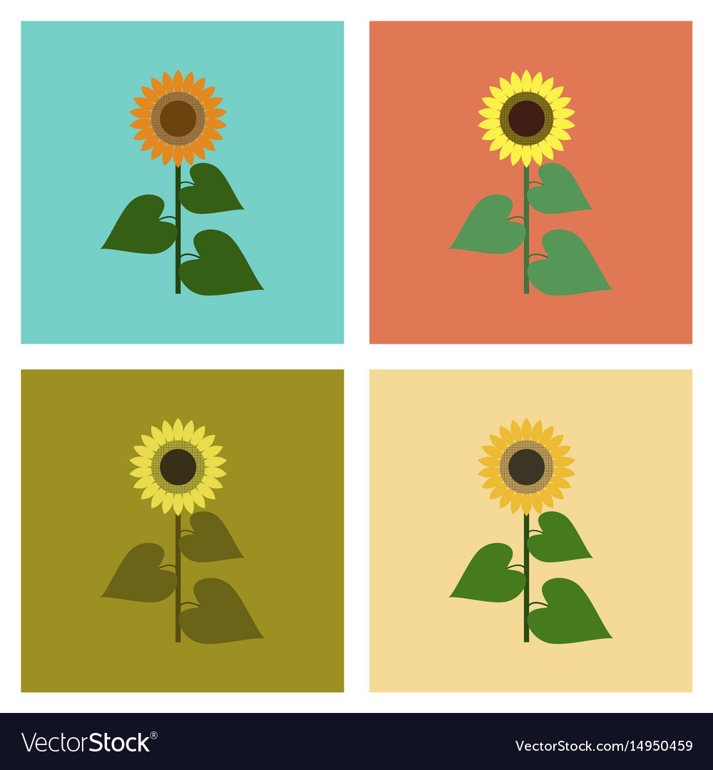 sunflower line icon concept sunflower flat