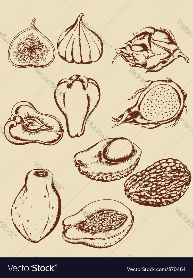 Vintage hand drawn tropical fruits vector image