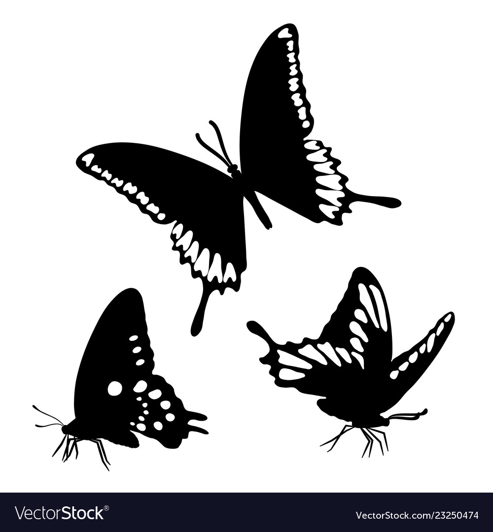 Black silhouettes butterflies isolated white