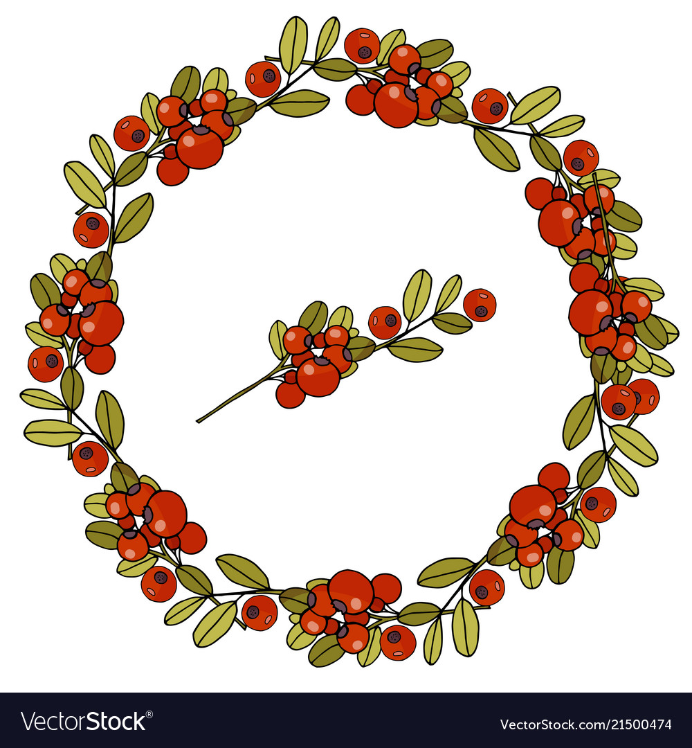 Wreath of leaves and berries of cranberries