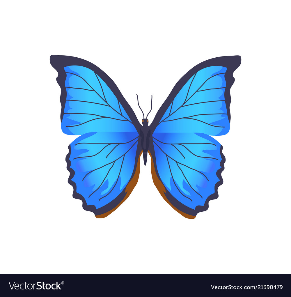 Butterfly Of Blue Color Poster Royalty Free Vector Image