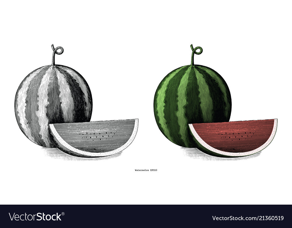 Watermelon hand drawing vintage clip art isolated