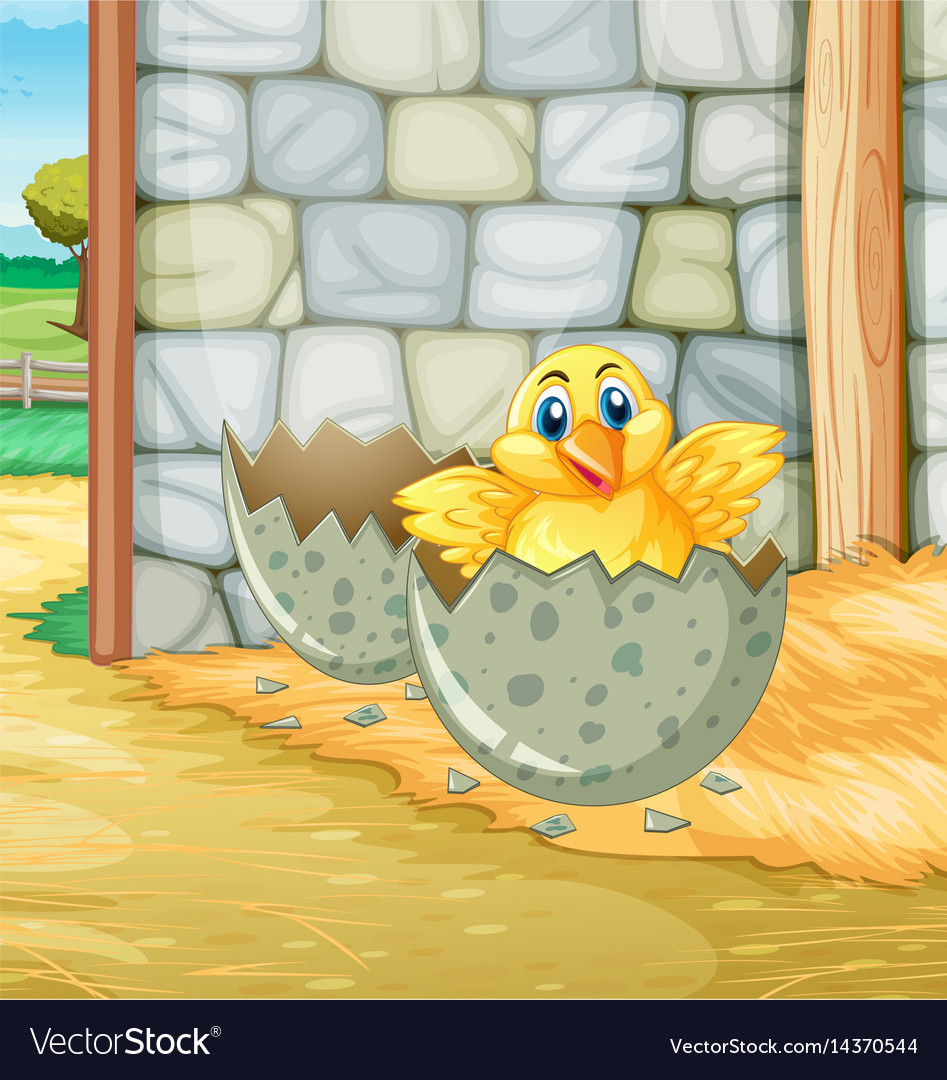 Little chick hatching egg in barn vector image