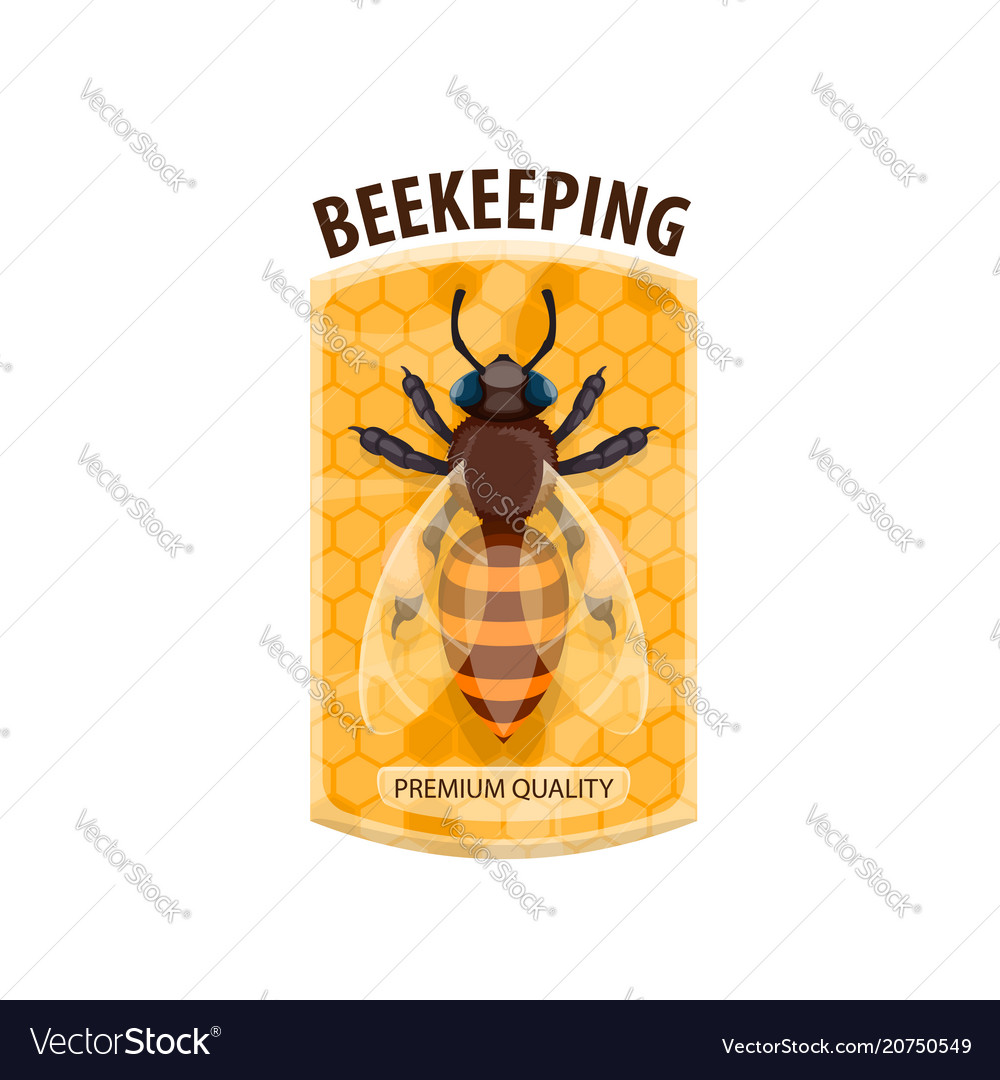 Beekeeping icon with honey bee and honeycomb