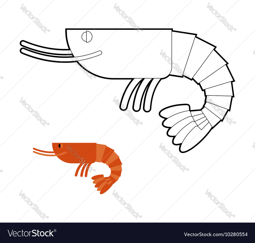 Shrimp coloring book Small Marine cancroid Ocean vector image