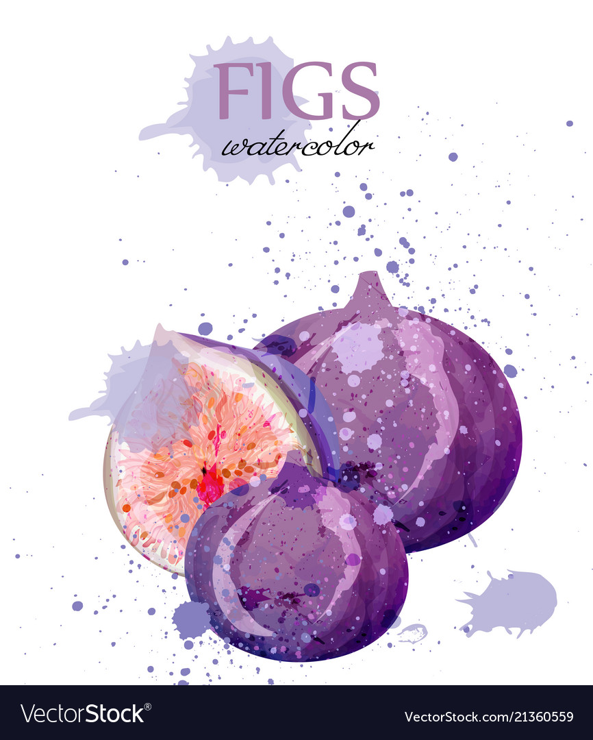 Fig fruits watercolor delicious colorful
