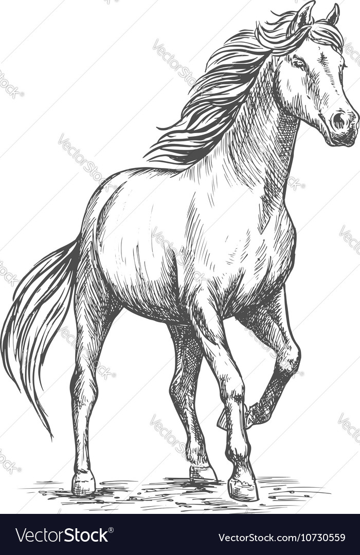 White horse with stomping hoof portrait vector image