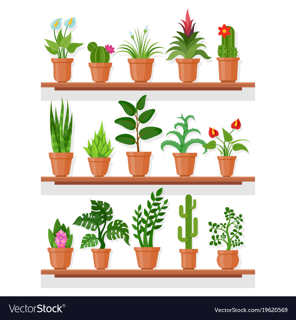 Indoor Plants On Shelf Royalty Free Vector Image