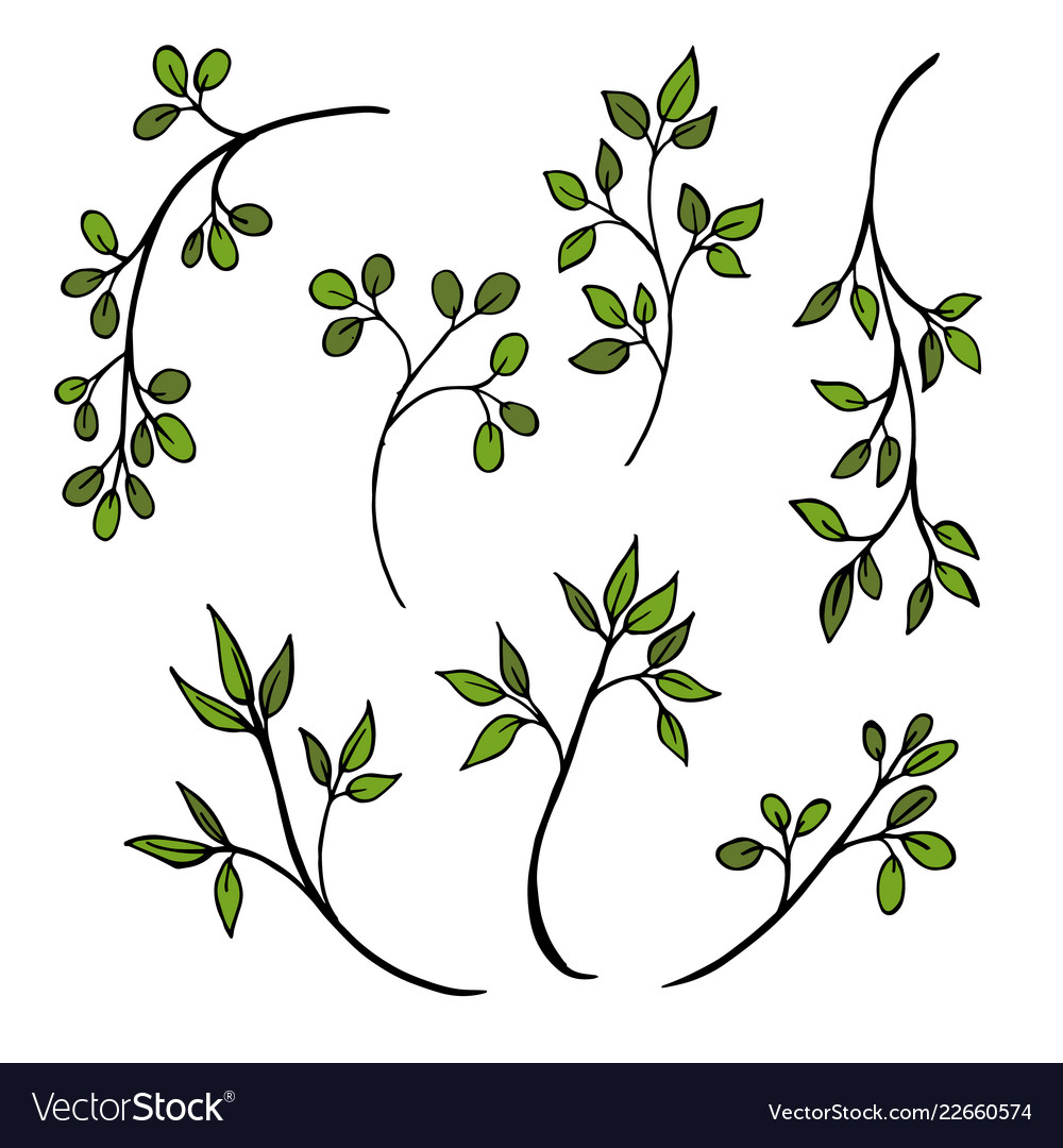 Drawing herbs floral background