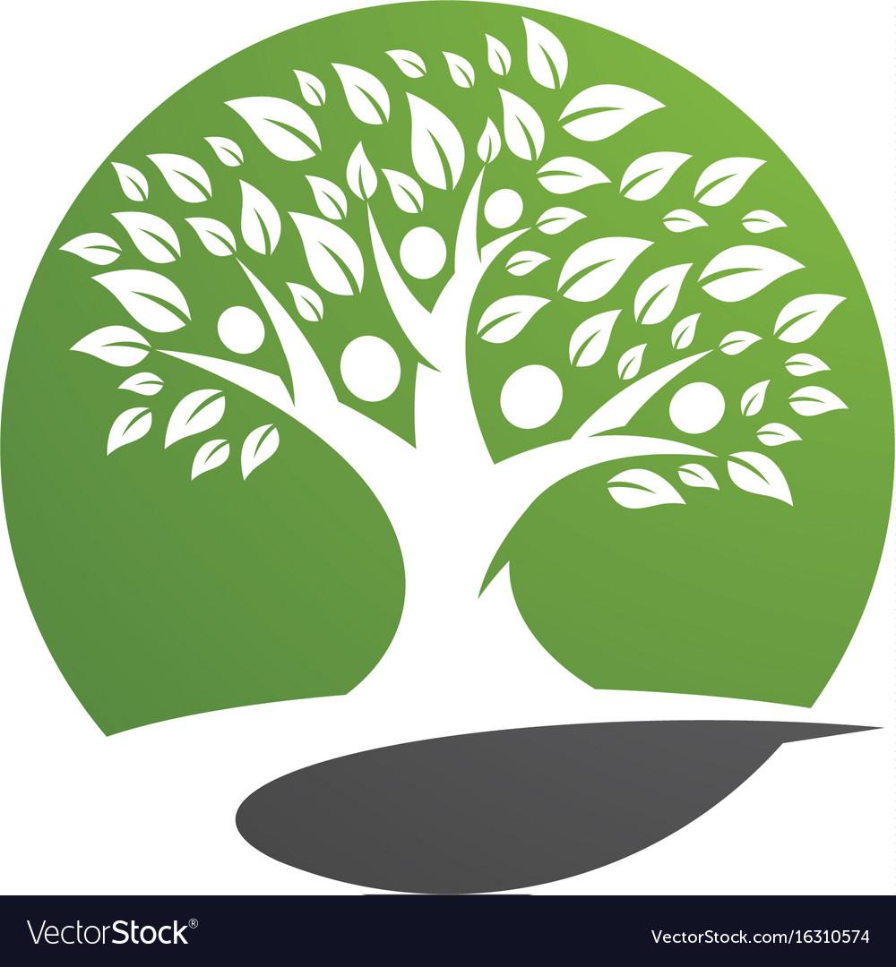 family tree logo template icon design royalty free vector
