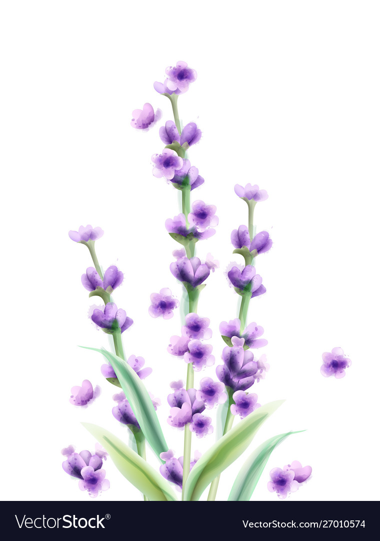 Lavender watercolor card isolated summer floral