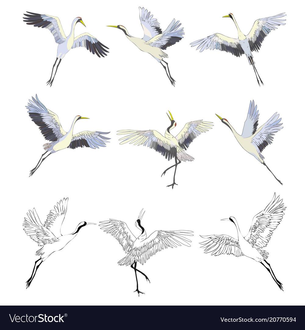 Wild birds in flight animals in nature or in the