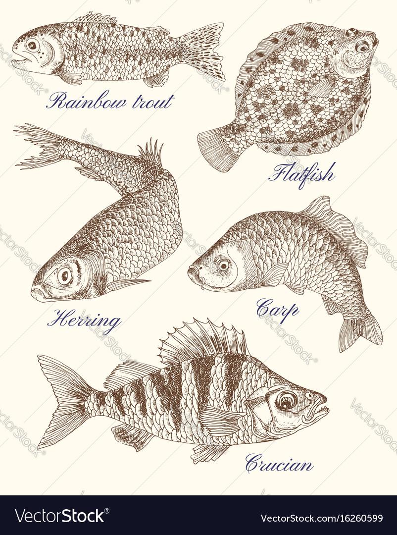 Design graphic set with fish