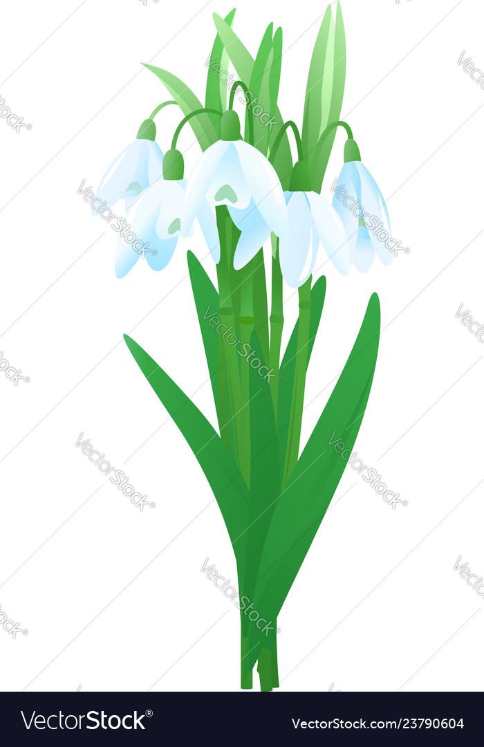 Bouquet snowdrop flowers
