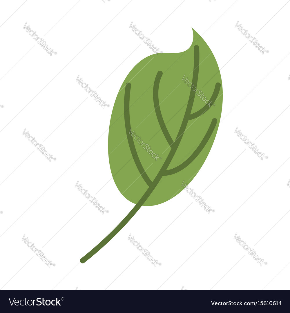 Green leaf isolated leaves on white background