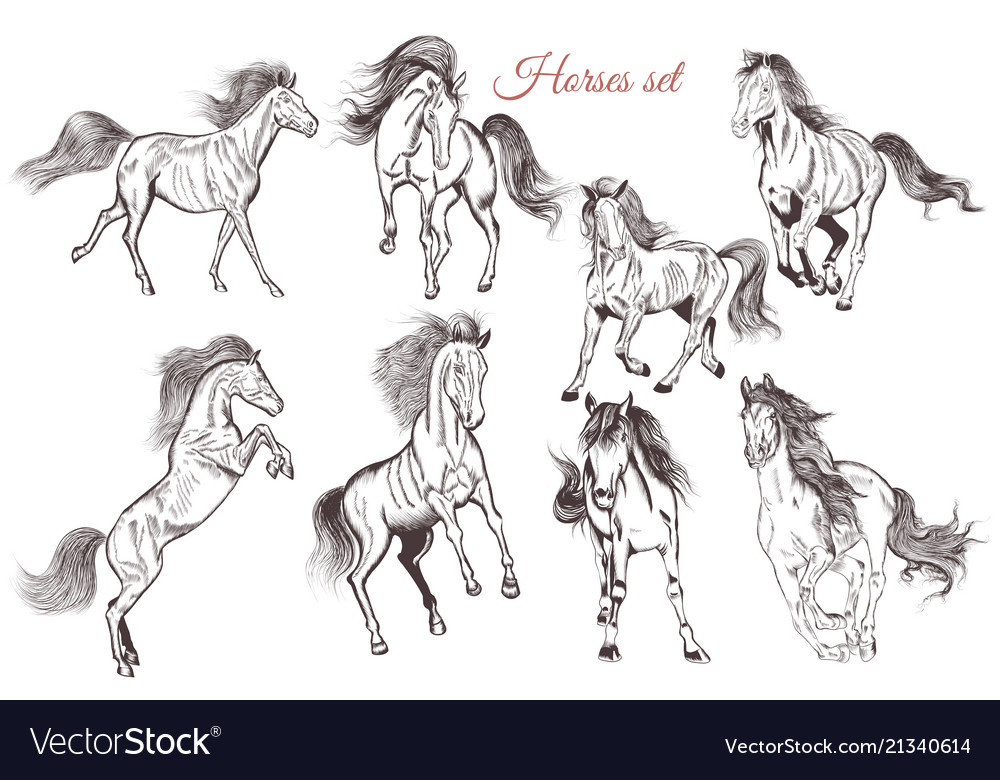 Set of detailed hand drawn horses for design