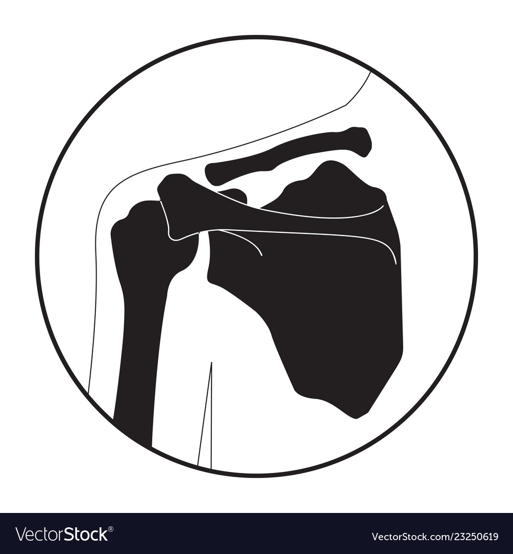 Human Shoulder Bones Royalty Free Vector Image