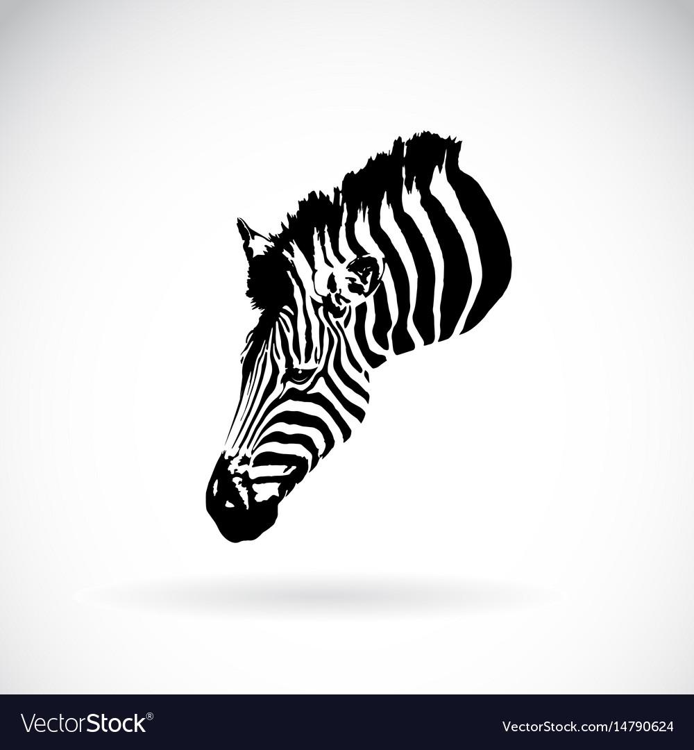 An zebra head on white background wild animals