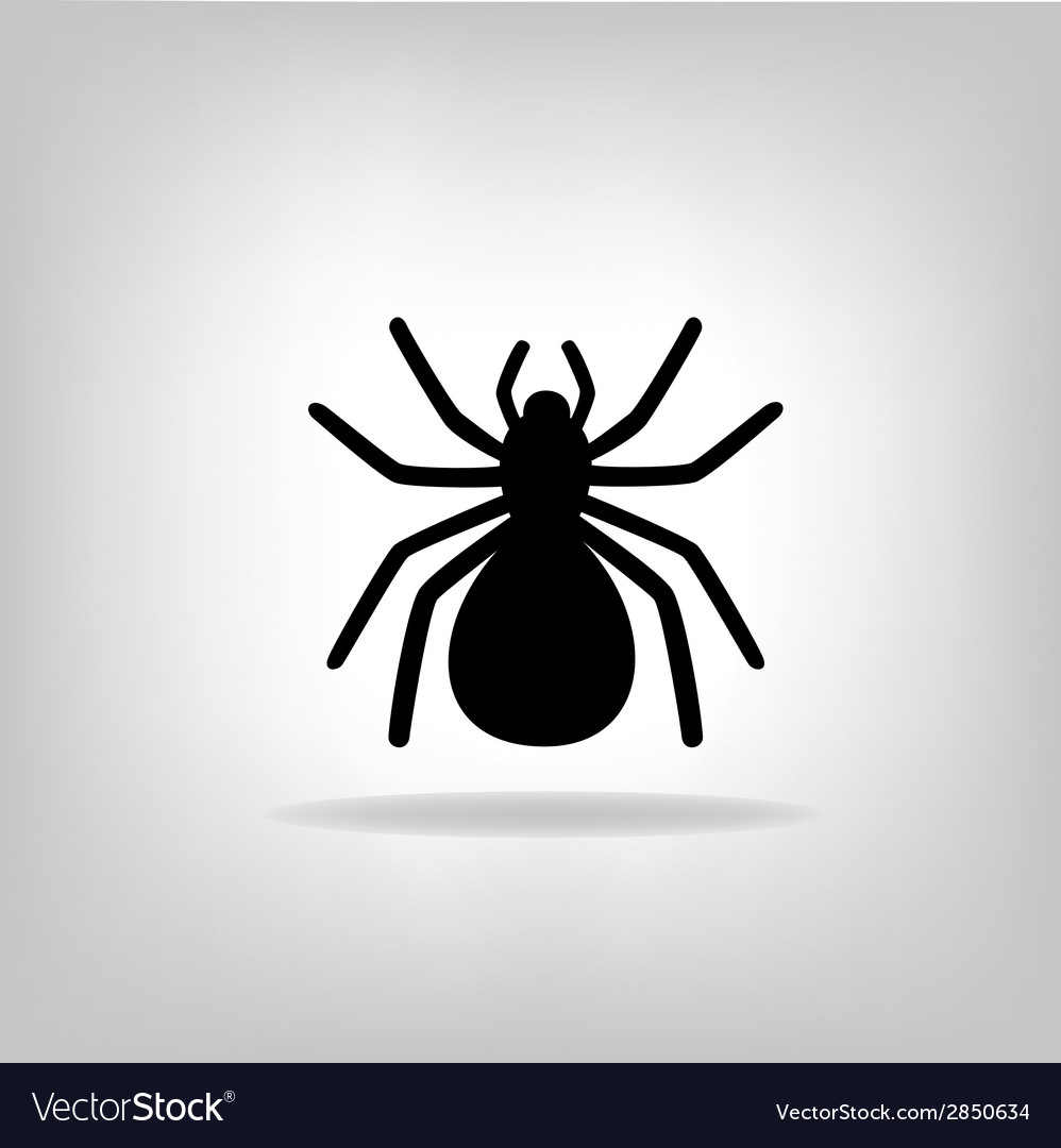 Black spider on a white background vector image
