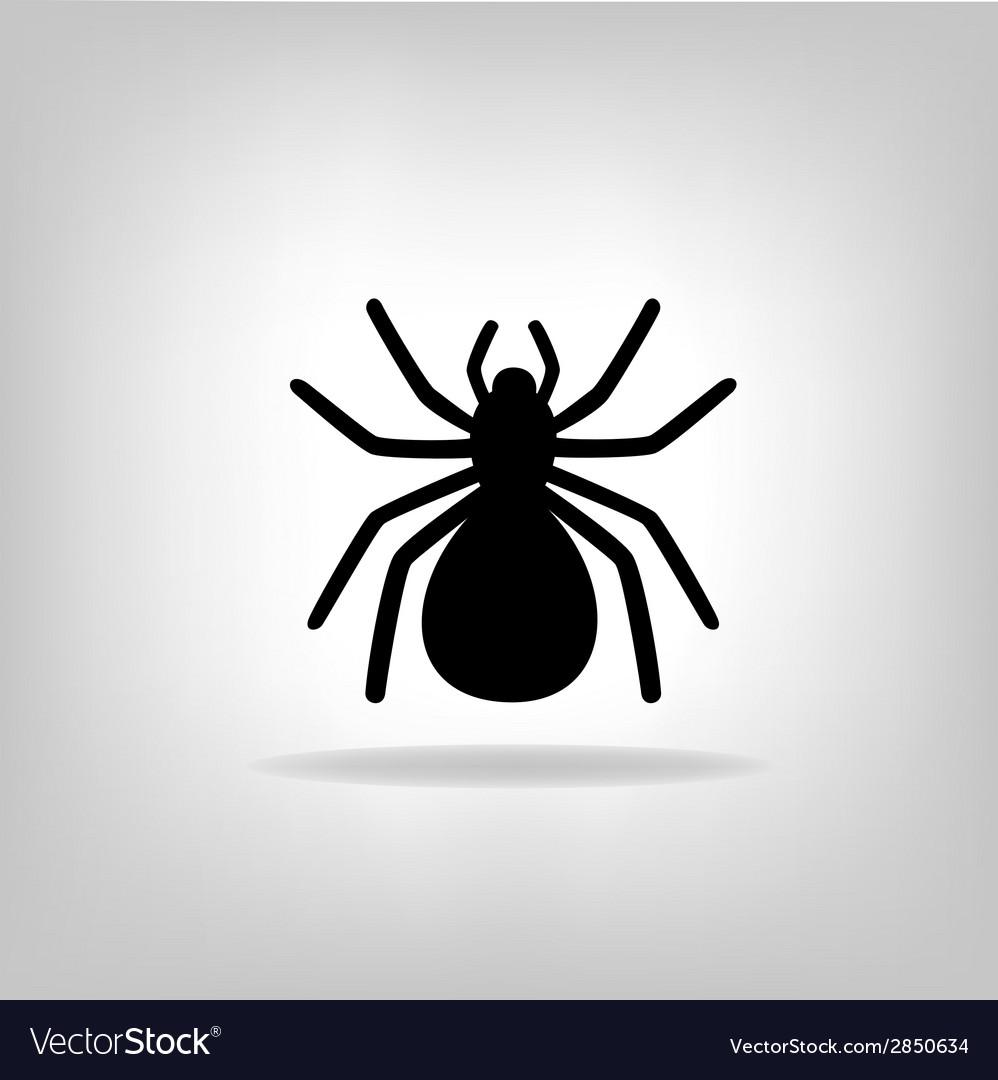 Black spider on a white background
