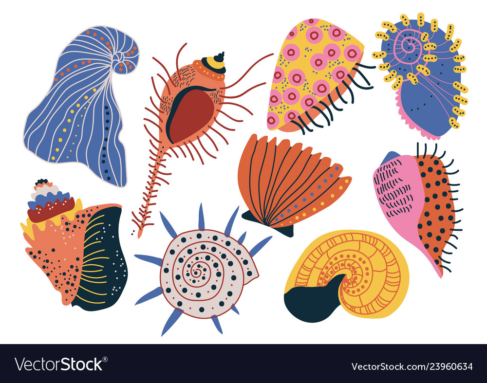 Collection of seashells tropical underwater clams