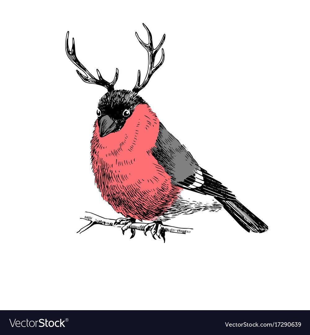 Bullfinch with deer horns