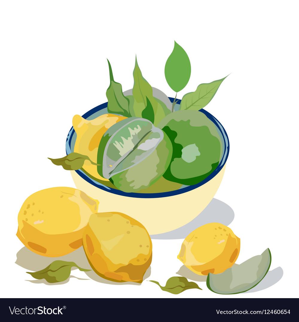 Fresh citrus fruits vector image