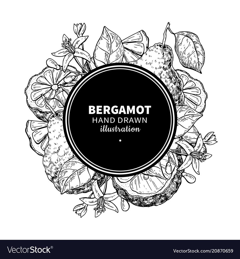 Bergamot drawing frame isolated vintage