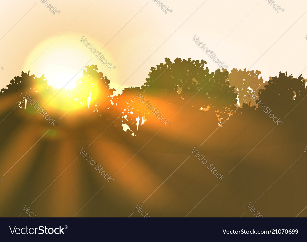 Sun rise with bright sunbeams an trees