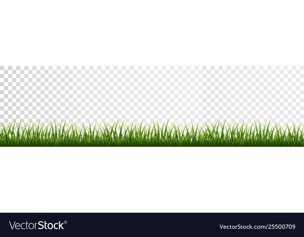 Green grass border set on transparent background
