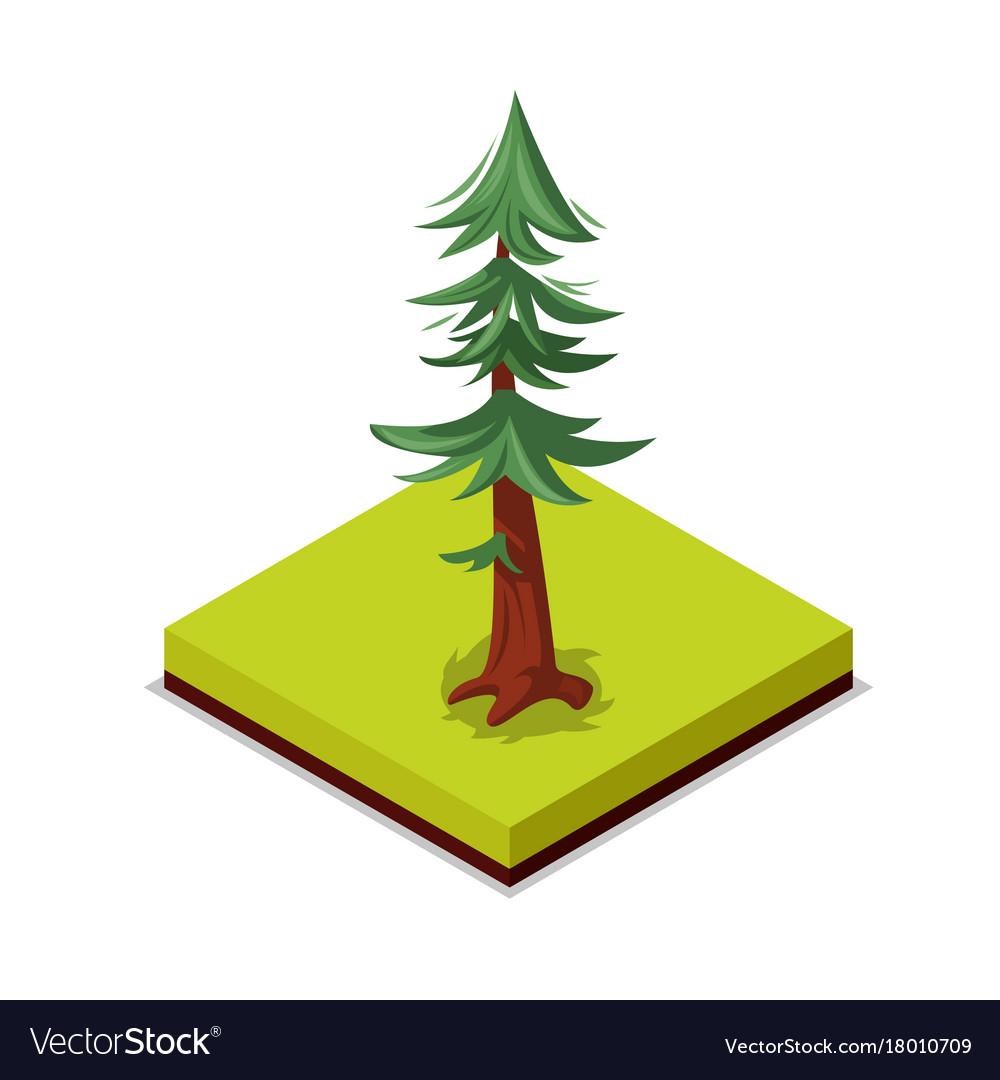 Green pine tree isometric 3d icon