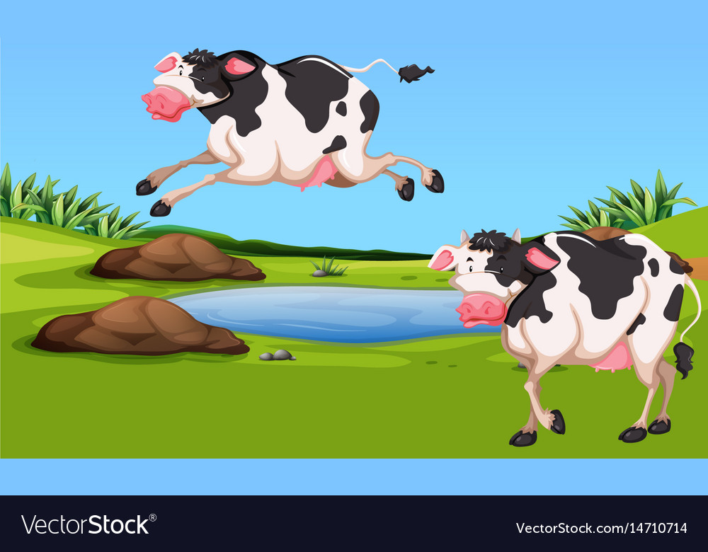 Two cows in the farm vector image