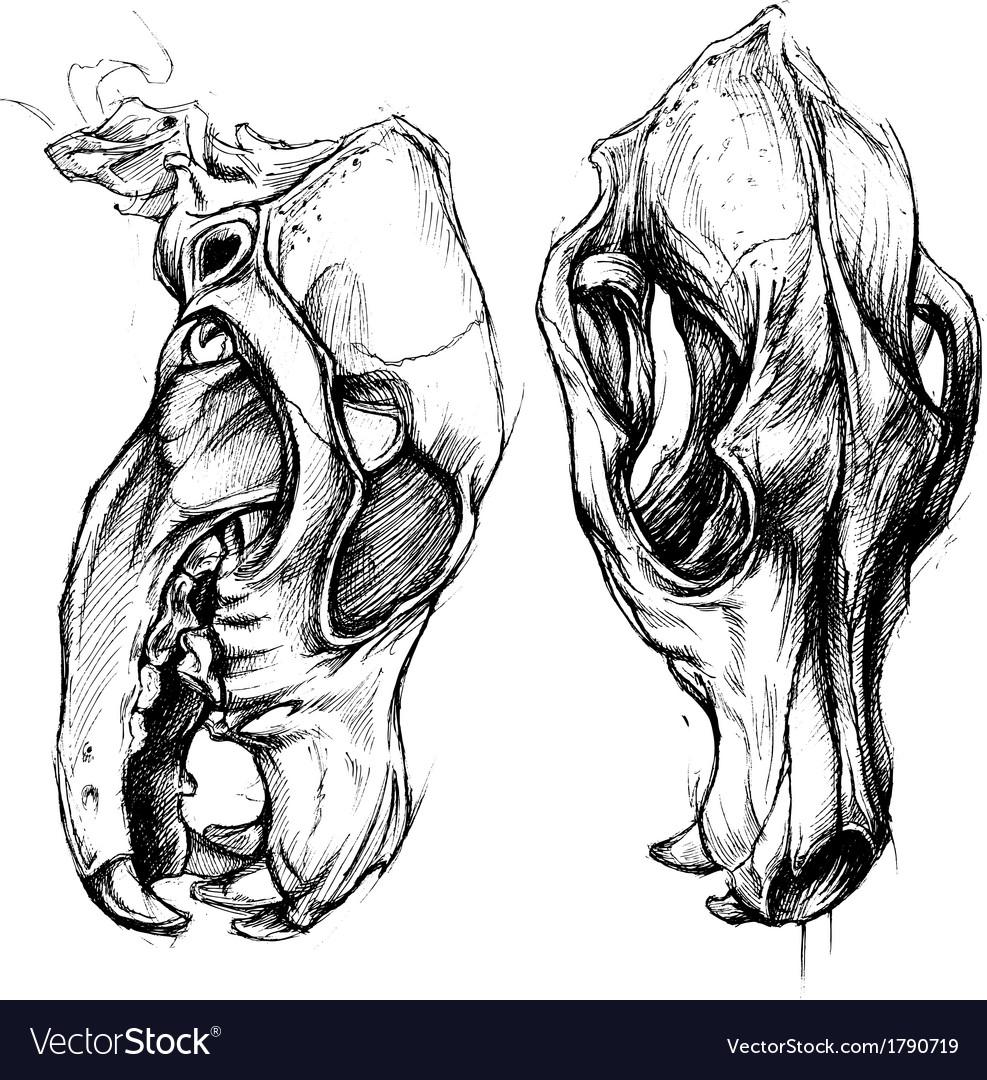 Dog Skull vector image