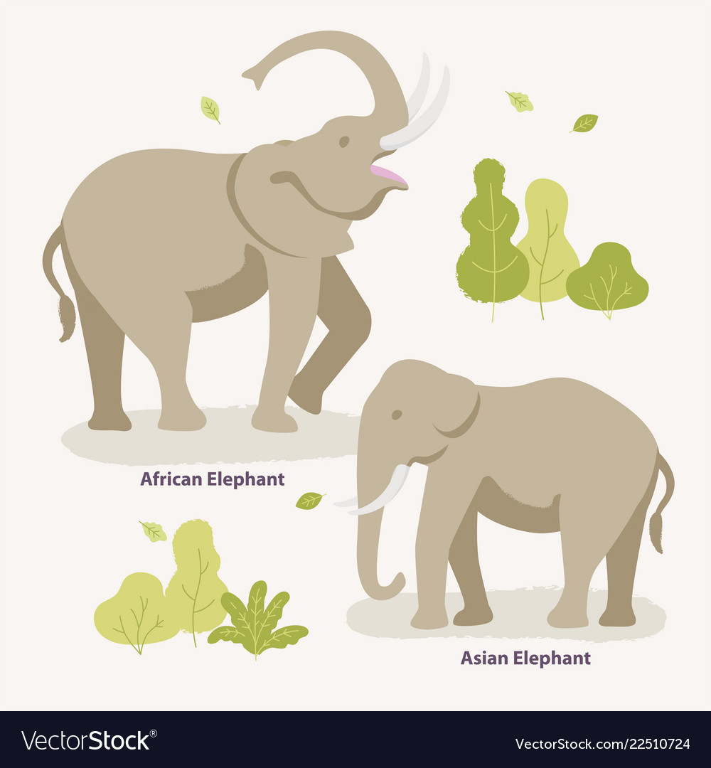 African elephant and asian elephant walking in the