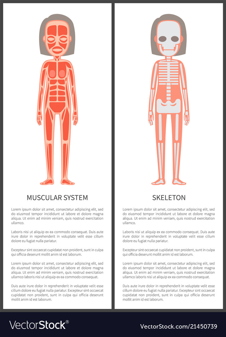 Muscular system and female skeleton colorful card Vector Image