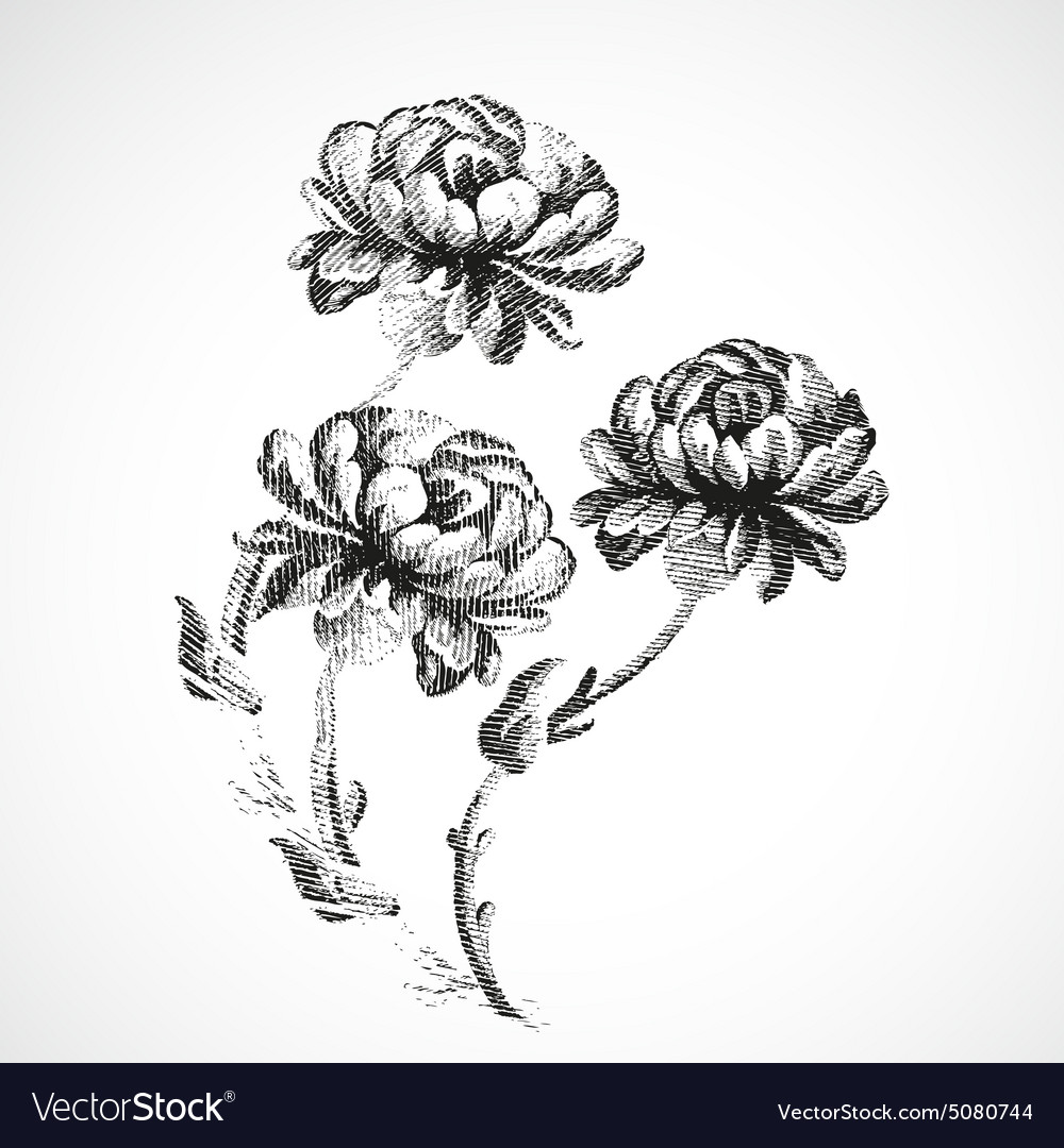 Hand Drawn Bouquet Of Three Flowers Of Peonies Vector Image