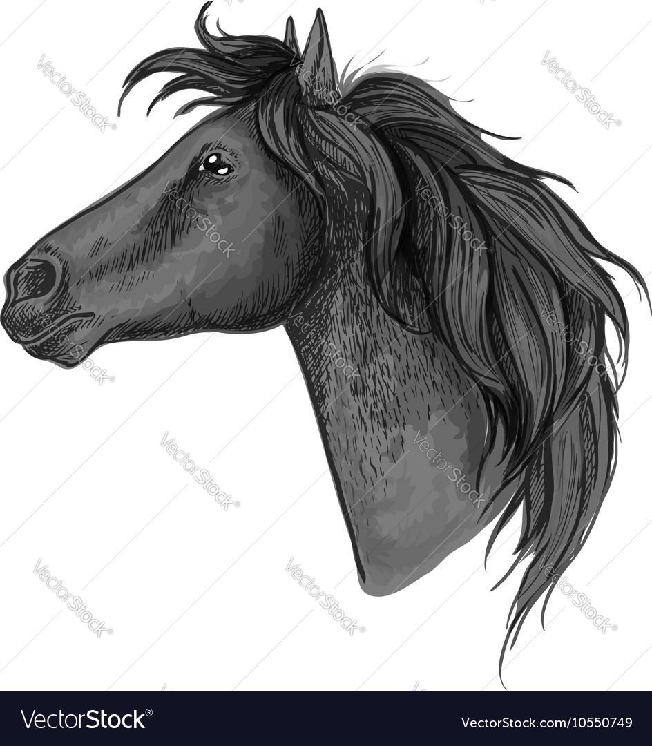 Black Horse Head Sketch Portrait Royalty Free Vector Image