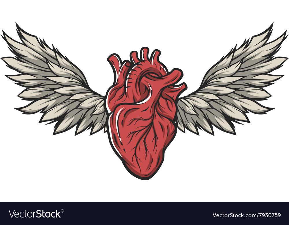 Anatomical Heart With Wings Royalty Free Vector Image