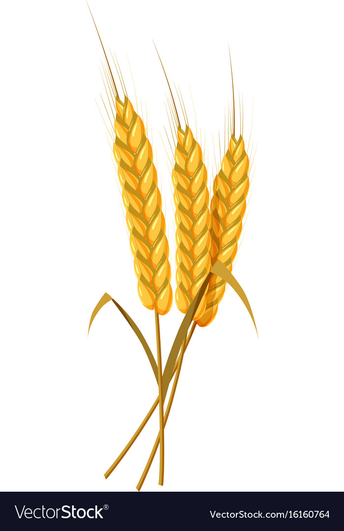 Открытки из колосьев пшеницы, христианские рождением детей