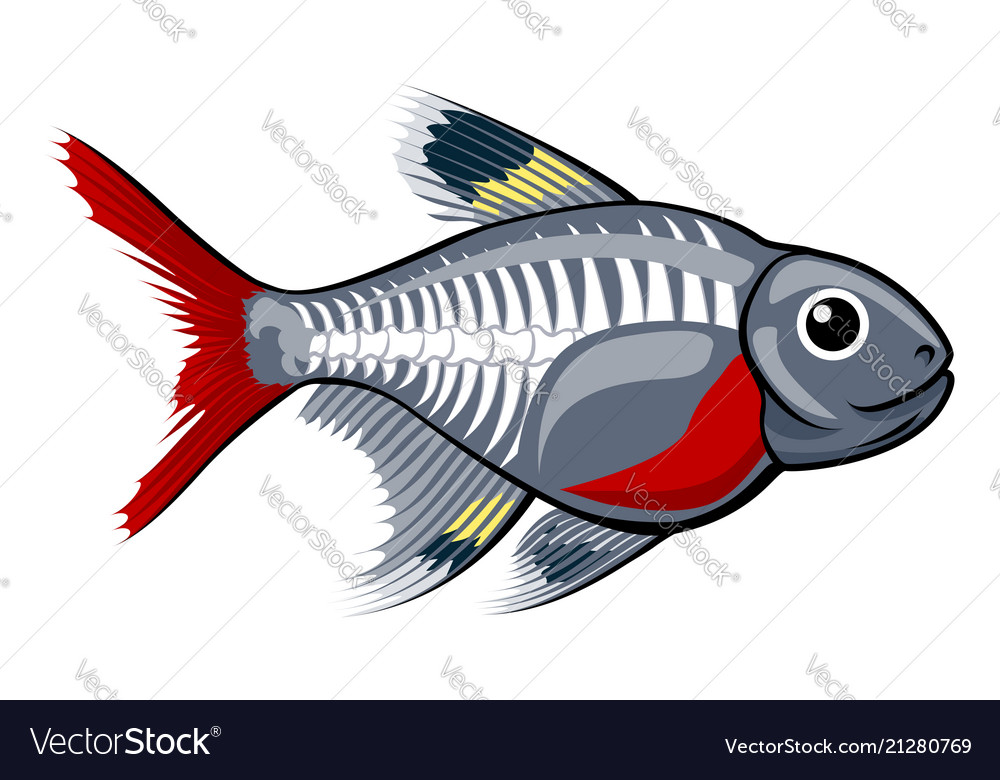 X-ray tetra cartoon fish vector image