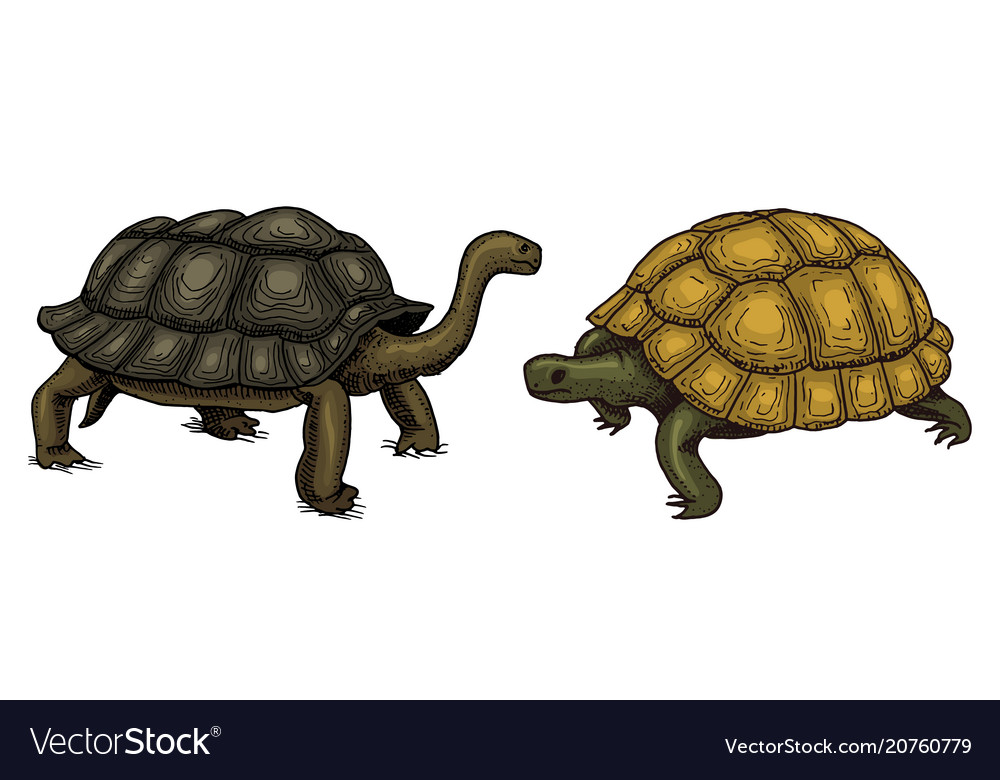 Tropical turtle and tortoise shell animals