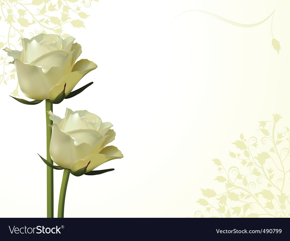 Rose and flourish background vector image