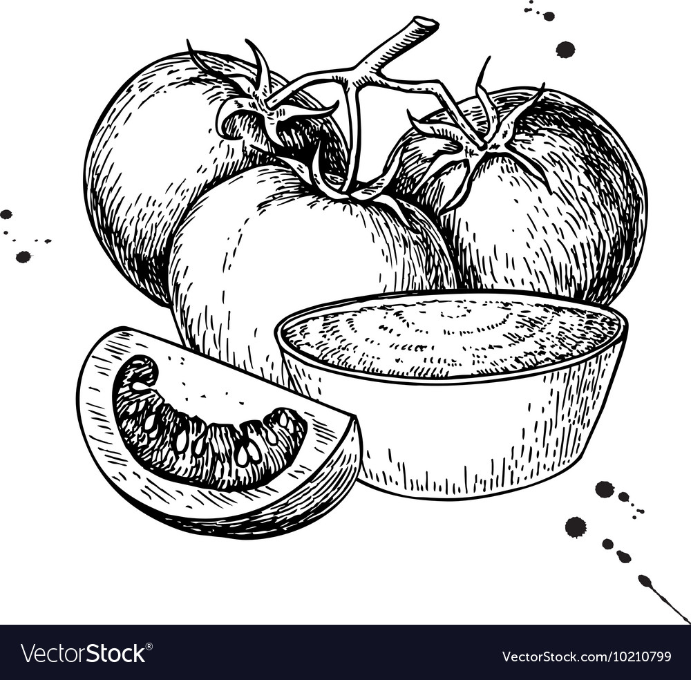 Tomato sauce Drawing isolated