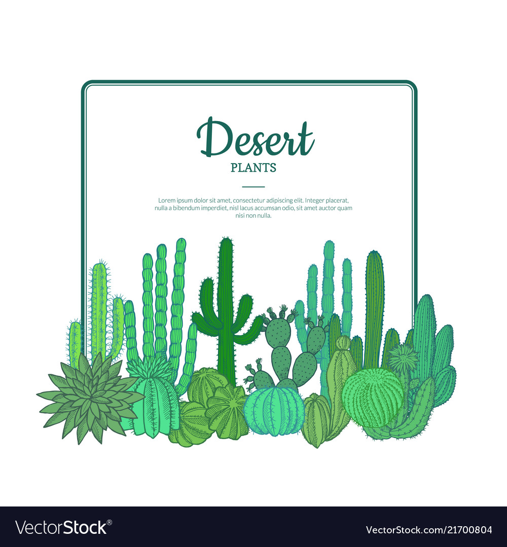 Hand drawn cacti plants cactuses pattern