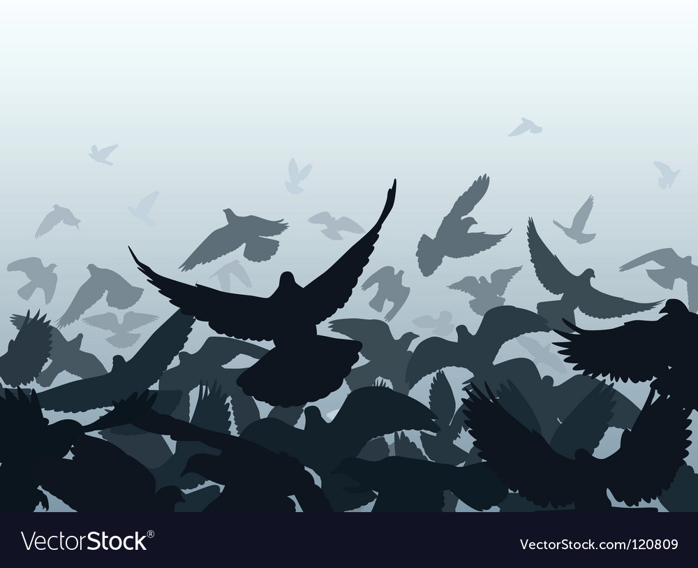 Pigeon edge vector image